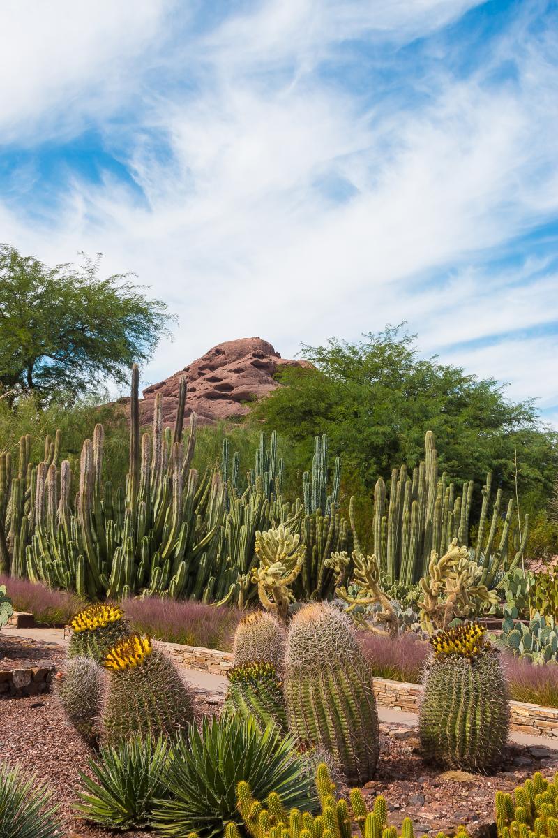 Pictures Of Garden Pathways And Walkways: American Public Gardens Association