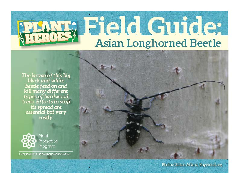 beetle Wanted book longhorned asian