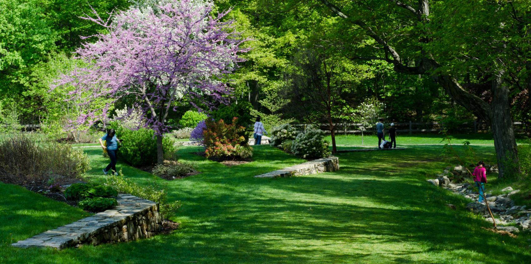 Arnold Arboretum Of Harvard University American Public Gardens