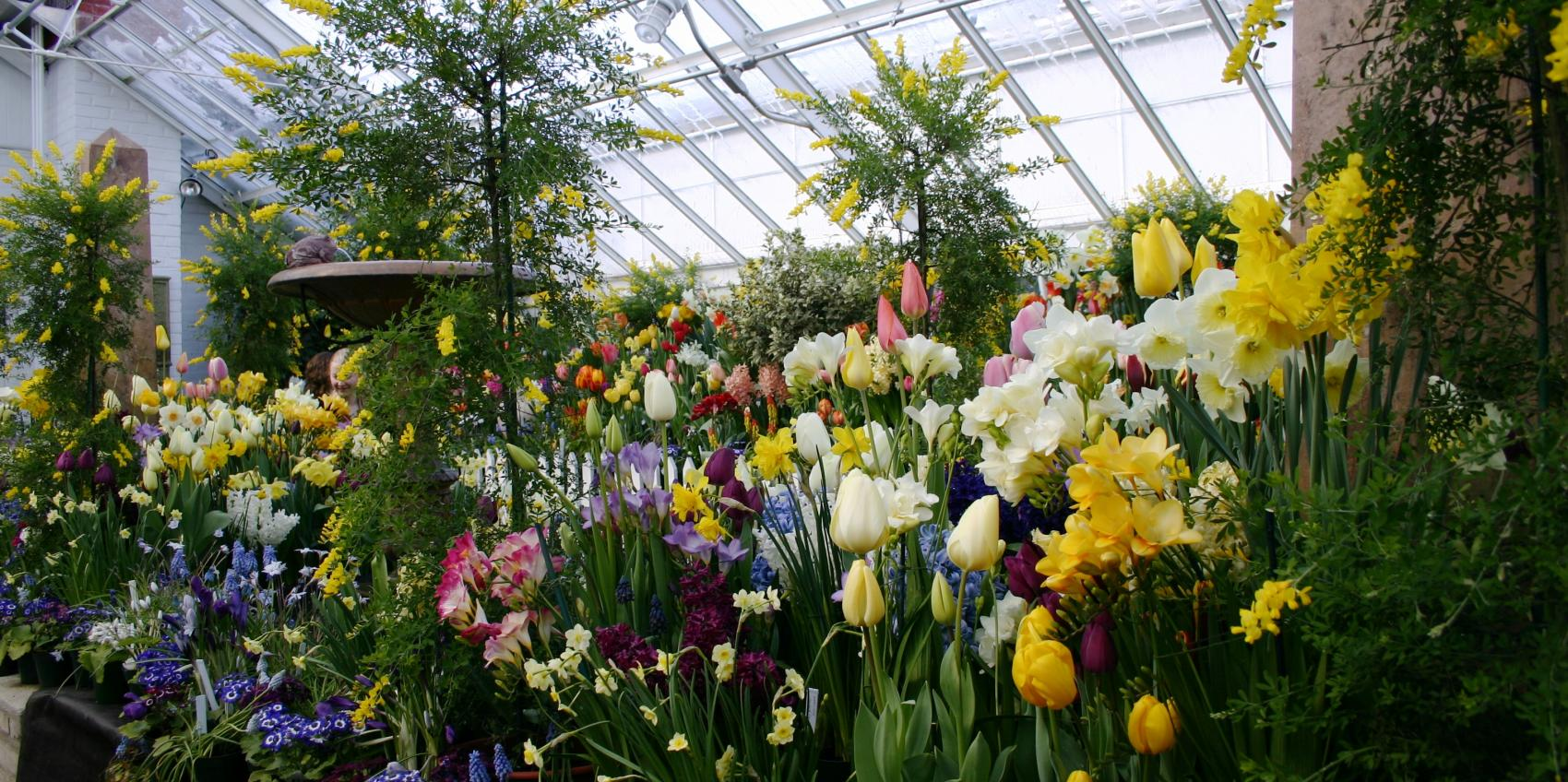 Smith College Bulb Show 2020.Botanic Garden Of Smith College American Public Gardens