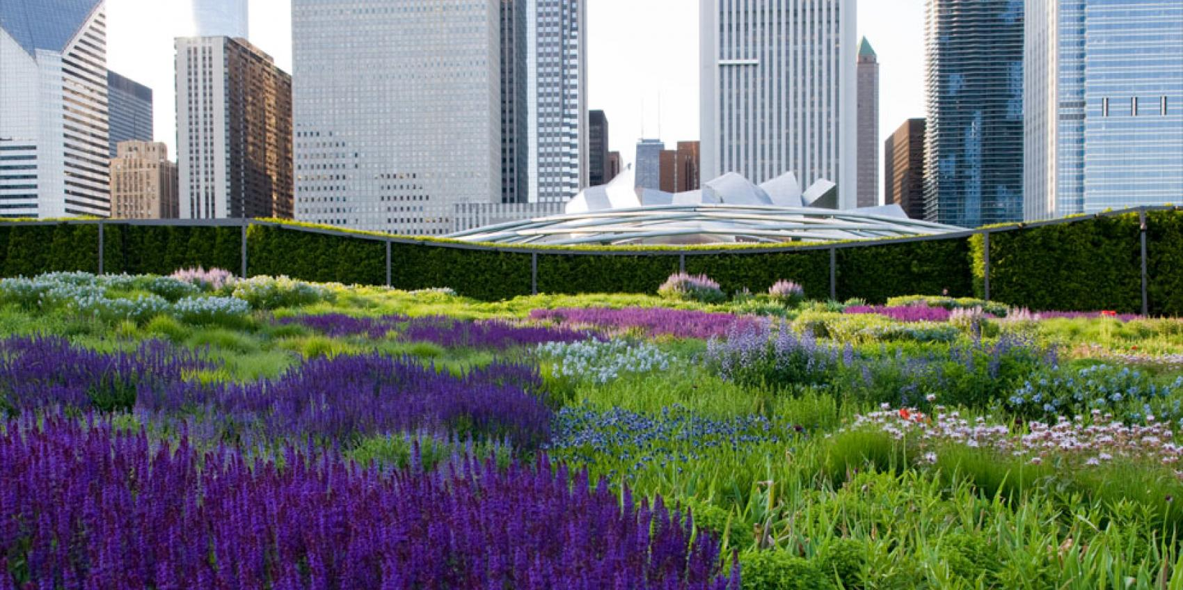 Big Shoulders hedge makes a protective backdrop in Lurie Garden, Chicago.