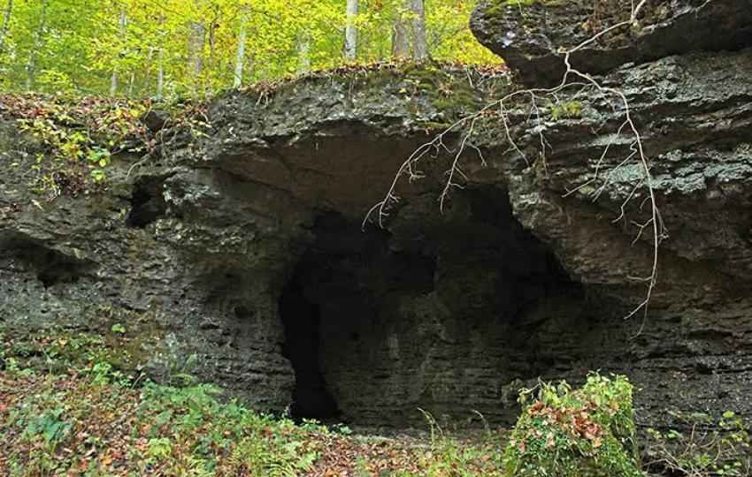 Bernheim image