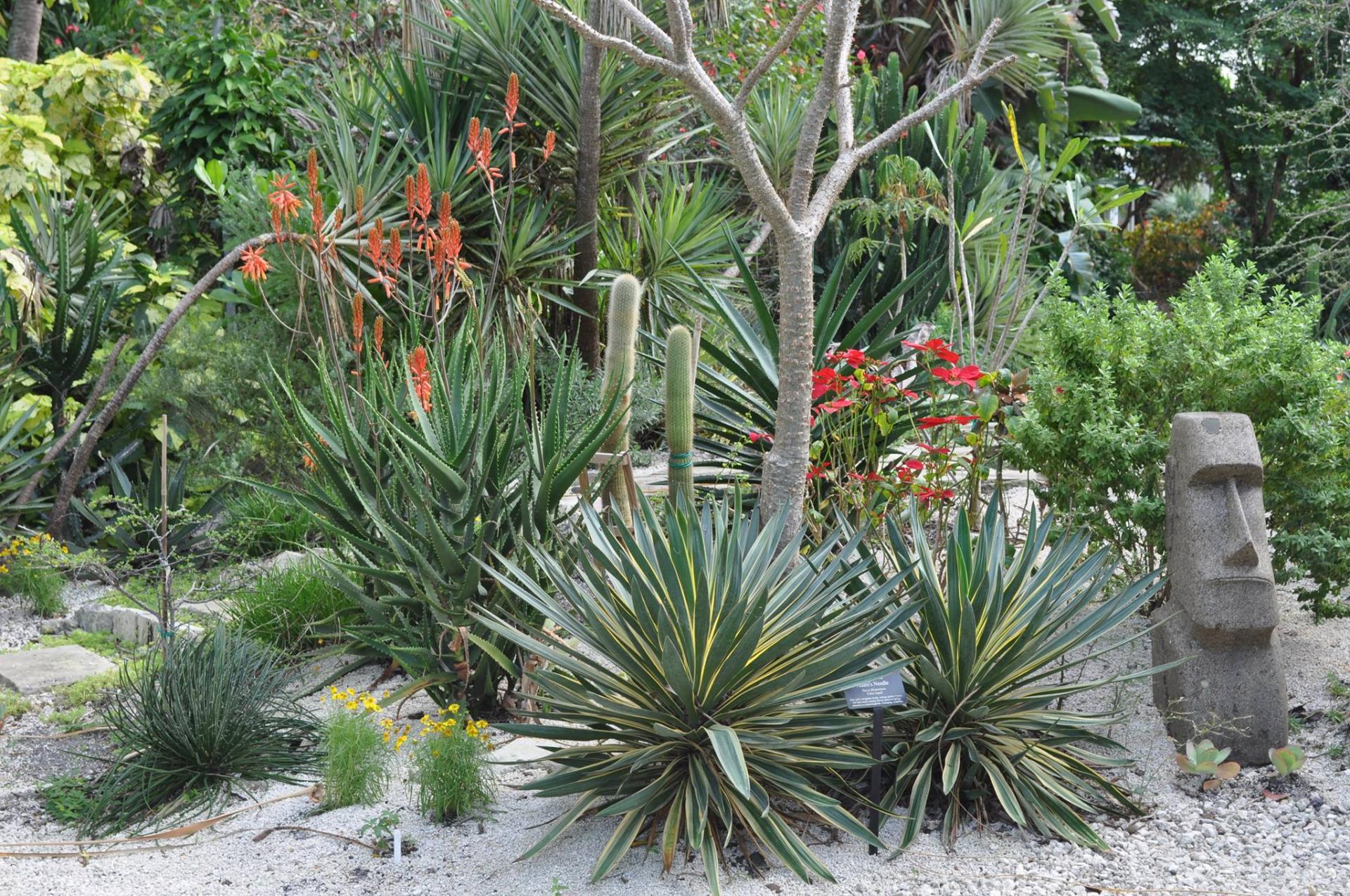 Mounts Botanical Garden Names Joel Crippen As Display