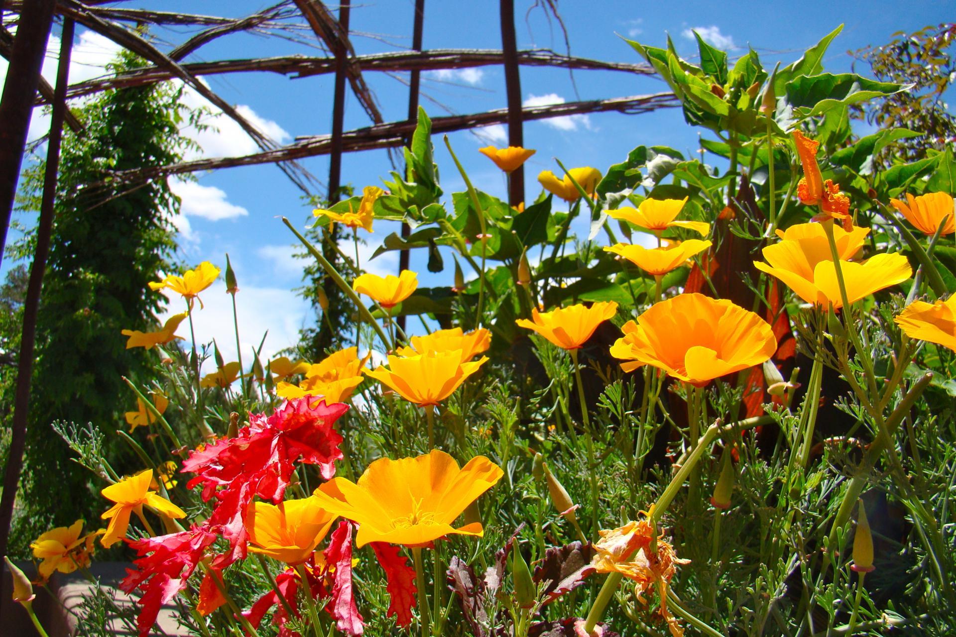 Santa Fe Botanical Garden photo